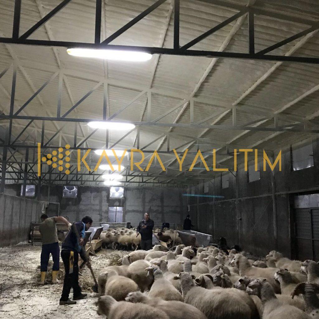 Poliüretan Sprey Köpük Hayvan Çiftlikleri İzolasyonu